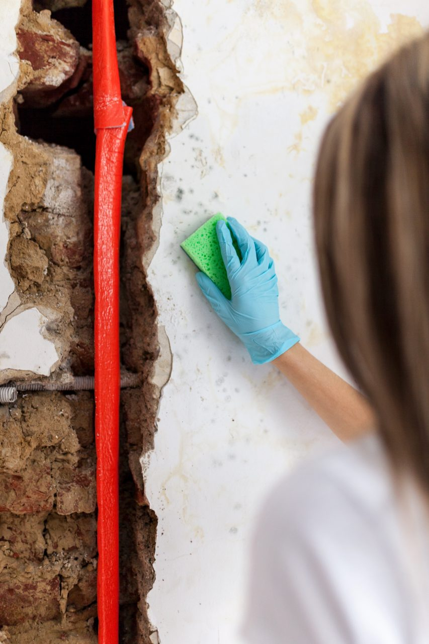 Does homeowners insurance cover mold